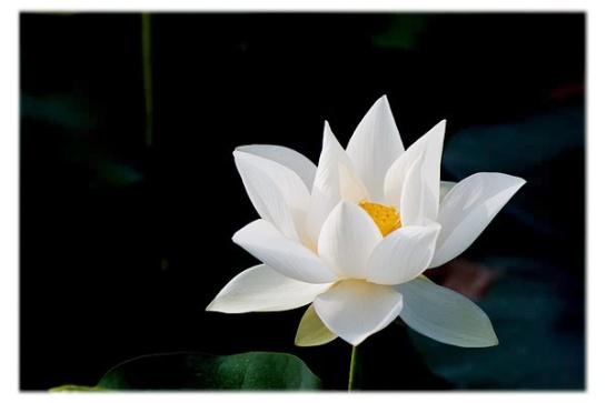 loto-bianco