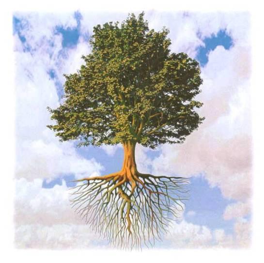 albero-della-vita21