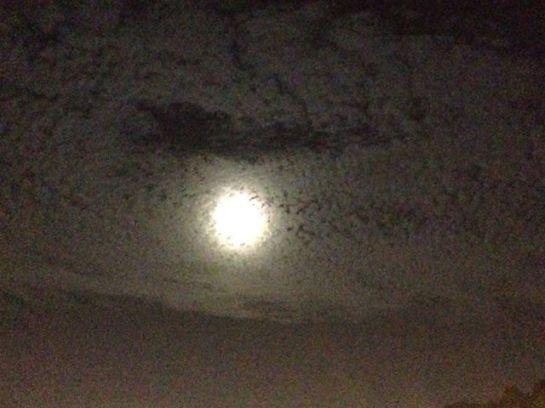 luna opaca