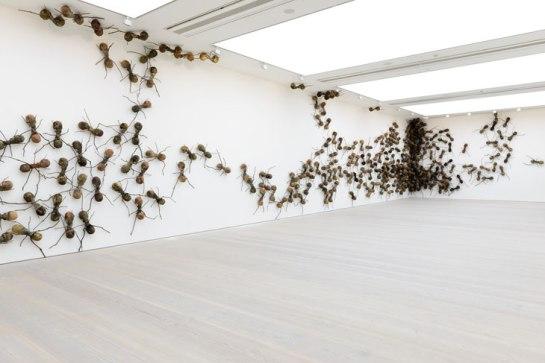 Rafael Gómezbarros - Invasive Ants